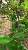 Tapete e árvores verdes Fotos de Stock Royalty Free