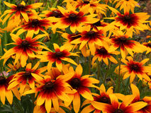 Tapete floral Imagem de Stock Royalty Free