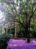 Tapete roxo impressionante e sonhador das flores imagens de stock