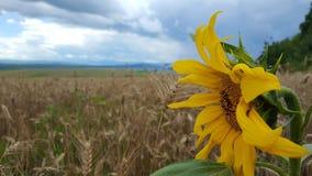Tapetowy kwiat fotografia royalty free