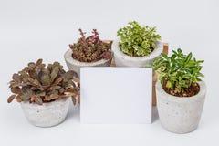 Tapetuje, grępluje, i rośliny w kwiatów garnkach Obrazy Royalty Free