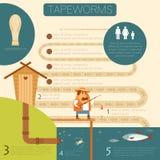 Tapeworm life circle banner Stock Photography