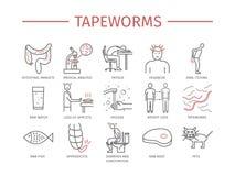 Tapeworms. Symptoms, Treatment. Line icons set. Stock Image