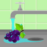 Tapez le raisin de lavage illustration libre de droits