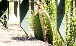 Tapezieren Sie mit Nahaufnahme der Kaktus- und Rosmarinanlage im Garten hinter dem Metallzaun stockfotografie