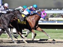 Tapferer Bob Stakes stockfoto
