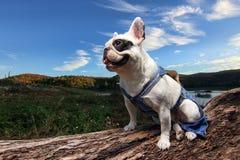 Tapferer Hund lizenzfreie stockfotos