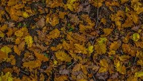 Tapijt van bladeren stock afbeeldingen