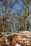 Tapijt van Bladeren royalty-vrije stock fotografie