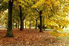 Tapijt van bladeren onder de bomen stock foto