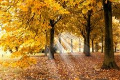 Tapijt van bladeren onder de bomen royalty-vrije stock fotografie