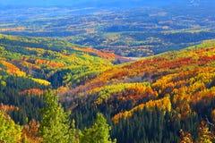 Tapijt van de herfstbomen royalty-vrije stock fotografie