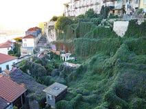 Tapijt van Ochtendgloriën, Porto, Portugal Royalty-vrije Stock Fotografie