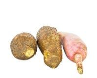 Tapioca Cassava II Stock Images