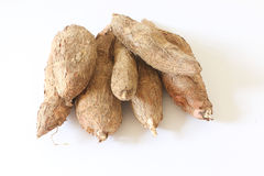 Tapioca (Cassava root) Royalty Free Stock Photos