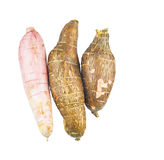 Tapioca Cassava VII Royalty Free Stock Photography
