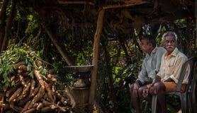 Tapioca que cosecha en Kerala imagen de archivo libre de regalías