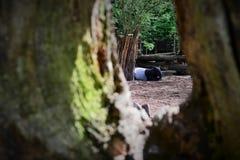 tapir Fotos de archivo