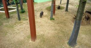 tapir Lizenzfreies Stockbild
