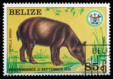 Tapir. BELIZE - CIRCA 1981: a stamp printed in Belize shows the tapir, circa 1981 Royalty Free Stock Photography