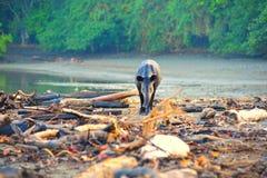 Tapir salvaje Imagen de archivo libre de regalías