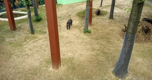 Tapir. In the zoo Royalty Free Stock Image