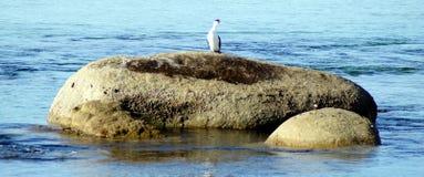 Tapis à longs poils sur une roche Photos libres de droits
