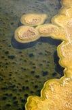 Tapis bactériens thermophiles dans des piscines de boue de Yellowstone Photographie stock libre de droits