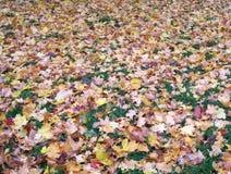 Tapis coloré des feuilles tombées images libres de droits