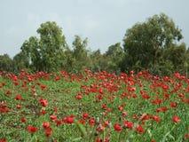 Tapis d'animon de floraison Photo libre de droits