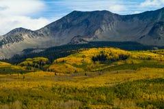 Tapis d'Aspen Trees d'or dans Rocky Mountains du Colorado photographie stock libre de droits