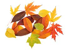 Tapis d'automne des lames Photo libre de droits