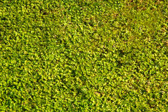 Tapis d'herbe photos libres de droits