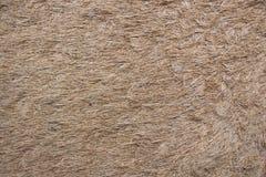 Tapis de fibre de noix de coco Photos stock