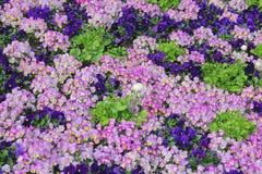 Tapis de fleur Photo libre de droits