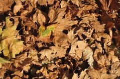 Tapis de lames d'automne Image libre de droits