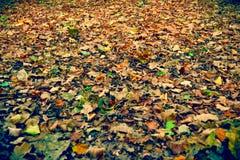 Tapis des feuilles Image libre de droits