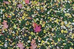 Tapis des feuilles d'érable d'automne image stock