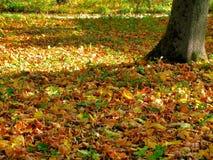 Tapis des feuilles d'automne tombées Photo libre de droits