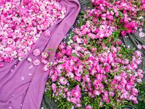 Tapis des fleurs photos libres de droits