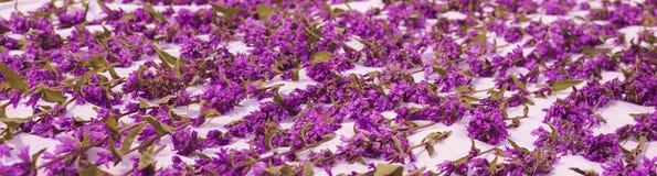 Tapis des fleurs violettes sur le plancher - romance Photos libres de droits