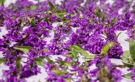 Tapis des fleurs violettes sur le plancher - romance Photo libre de droits