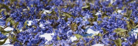 Tapis des fleurs violettes sur le plancher - romance Photographie stock libre de droits