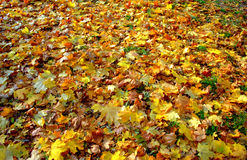 Tapis en baisse de feuilles de bel automne Photo libre de droits