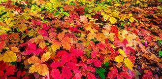 Tapis merveilleux de feuillage d'automne Photographie stock