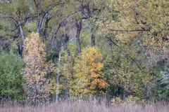 Tapisserie subtile de couleurs de chute dans le Colorado photo stock