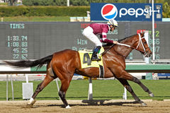 Tapizar Wins The Sham Stakes Stock Images