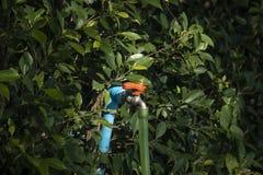 Tapkraan in de tuin stock afbeelding