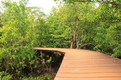 Tapom in Krabi Thialand. Tapom forest in Krabi Thialand Stock Photo