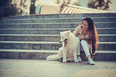 Tapotement du chien Image stock